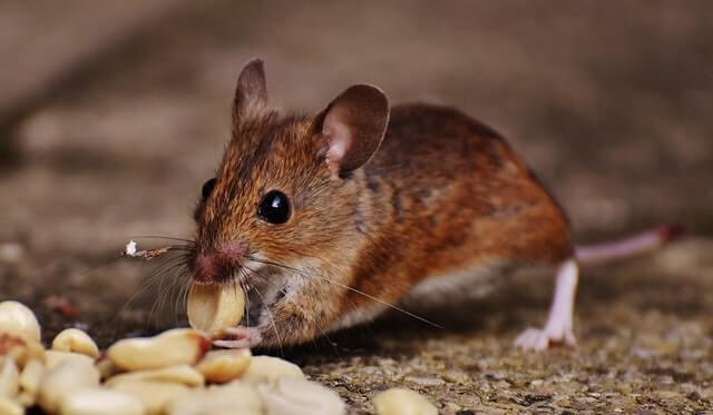 Understanding pest management