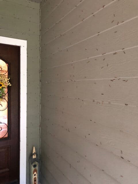 greenhouse-millipede-infestation