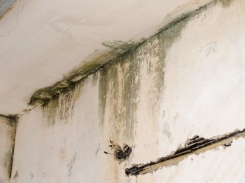 Moisture on or inside the walls can result in visible and unseen structural damage.